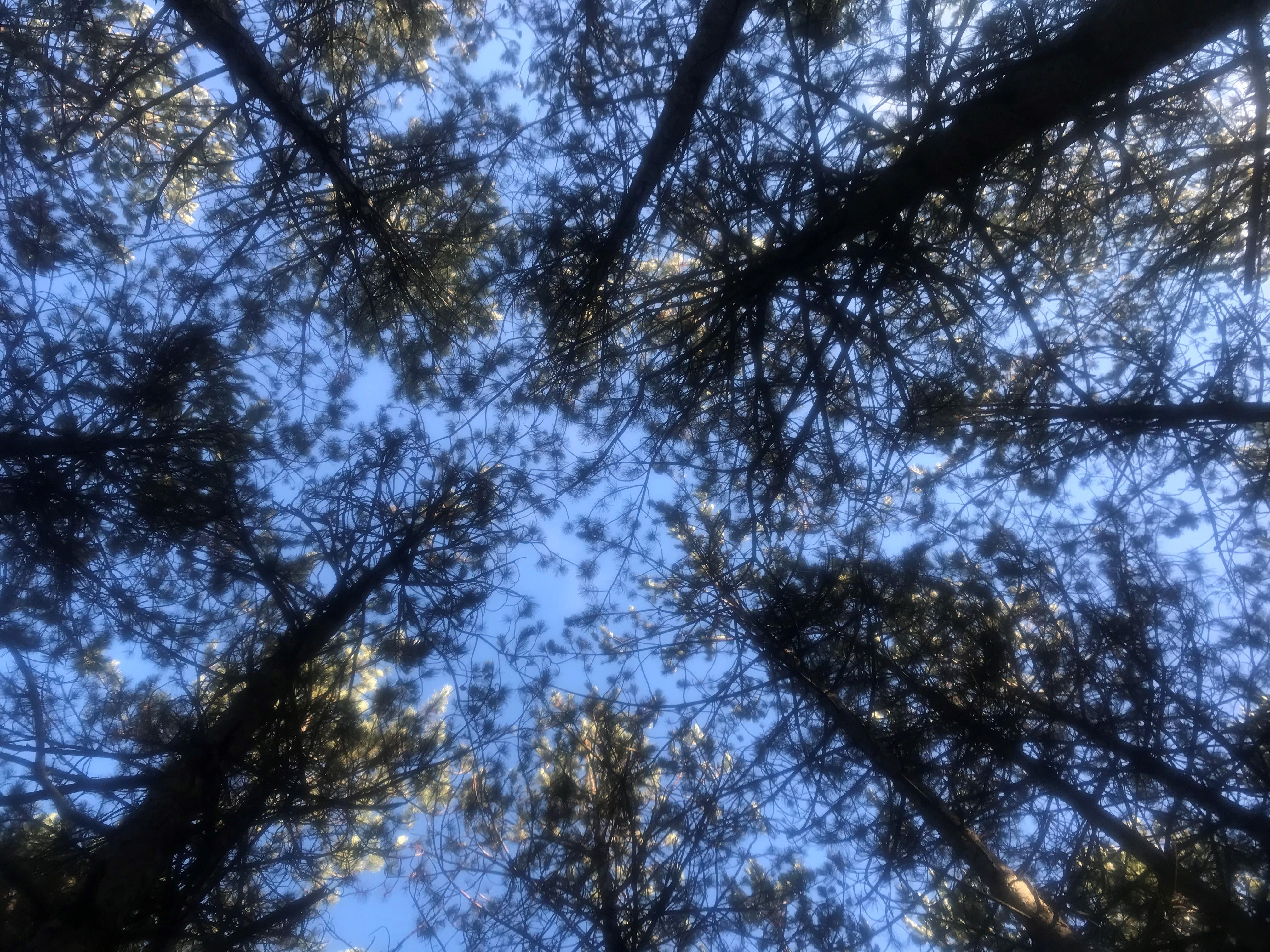 PYREMPFOR inaugura la Plataforma d'Ocupació Pública adreçada al sector forestal