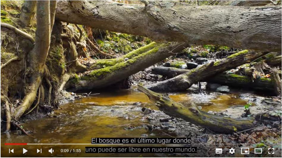 FORESTALS: mantenir el bosc amb una professió amb futur